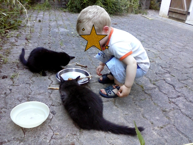 enfant-observe-les-chats
